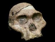 scheletro-scineza